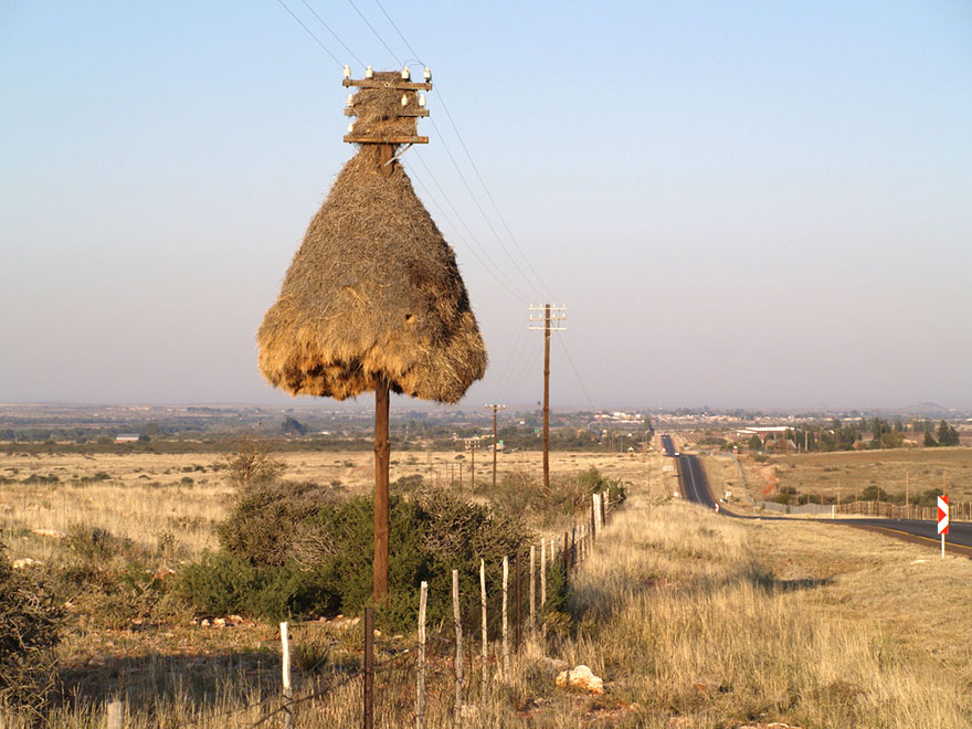 animal-architecture-nests-1-1