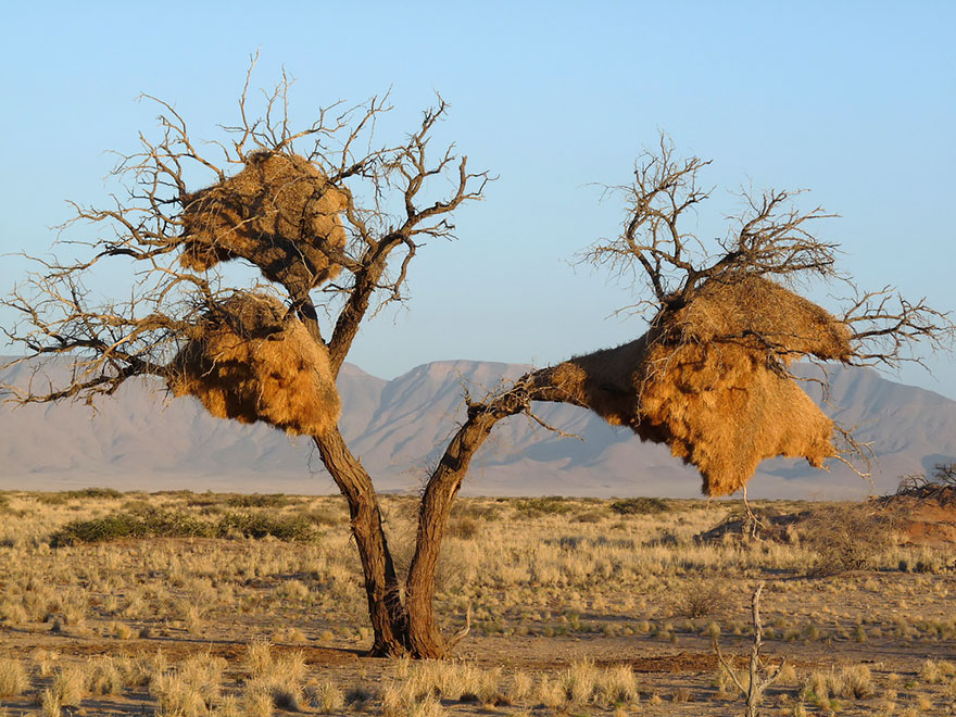 animal-architecture-nests-1-2