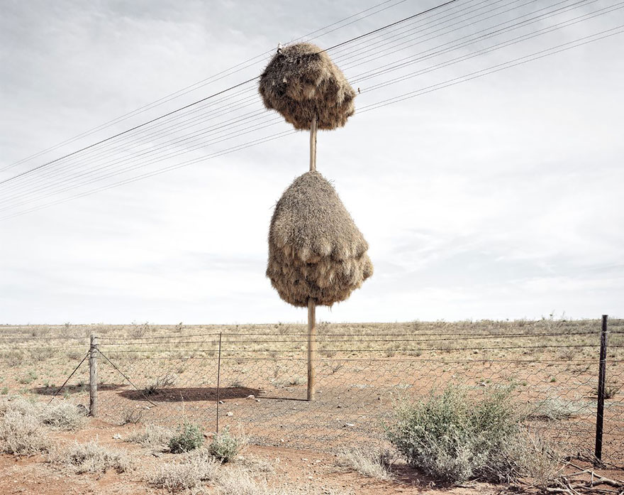 animal-architecture-nests-1-4