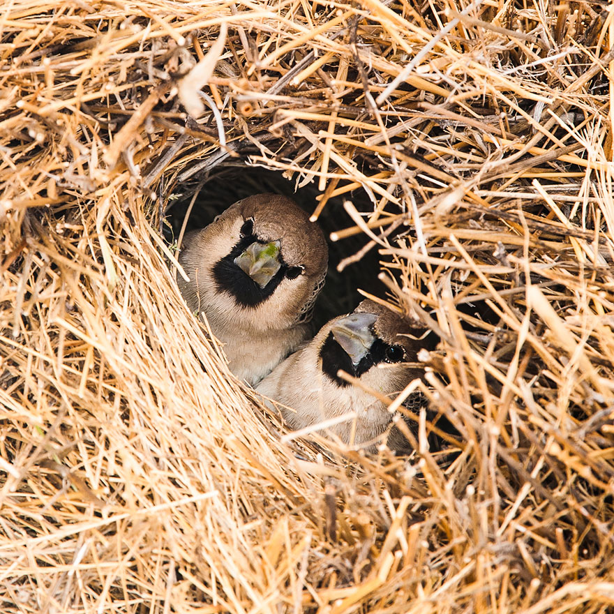 animal-architecture-nests-1-5