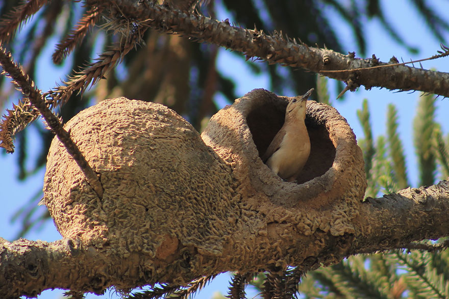 animal-architecture-nests-2-2