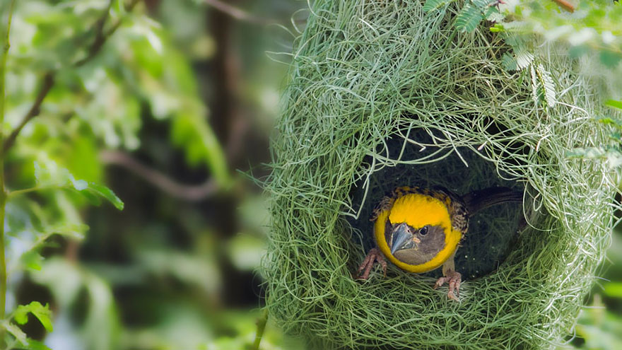 animal-architecture-nests-8-3