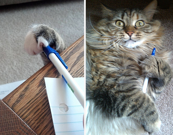 Pen Thief Caught In Action