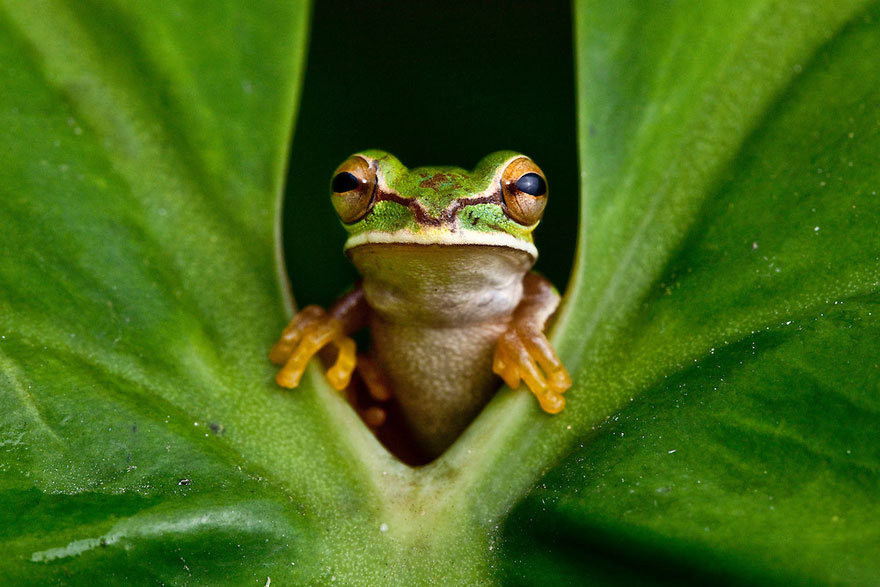 frog-photography-robin-moore-7