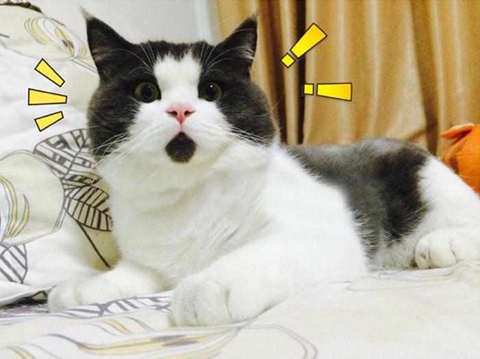 omg-cat-funny-4