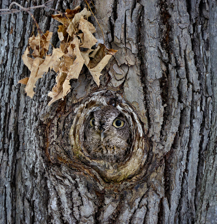 owl-camouflage-disguise-13