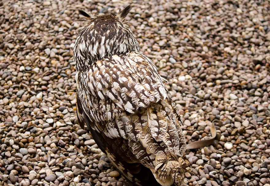 owl-camouflage-disguise-15