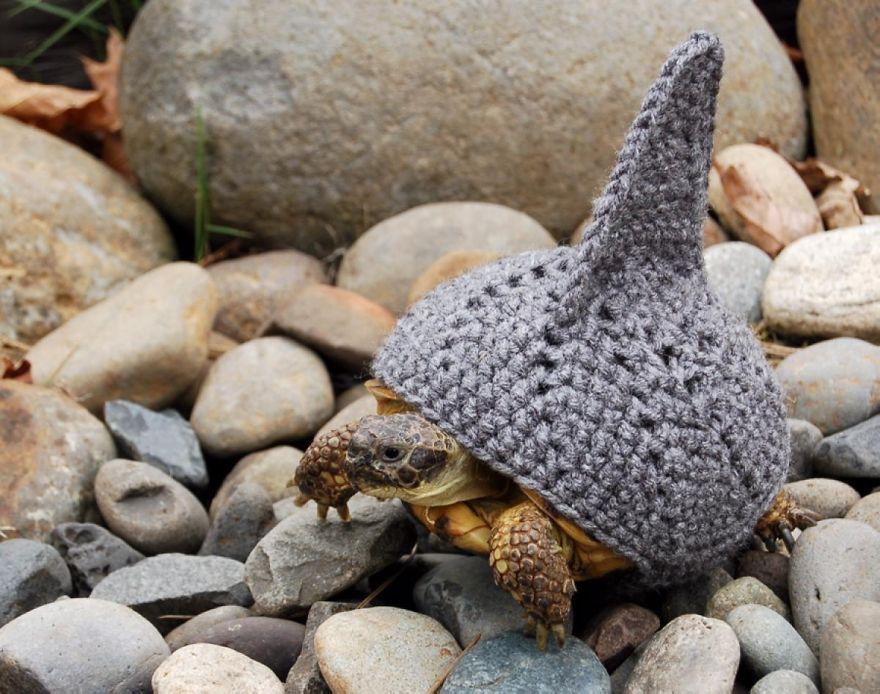Tubarão Turtle