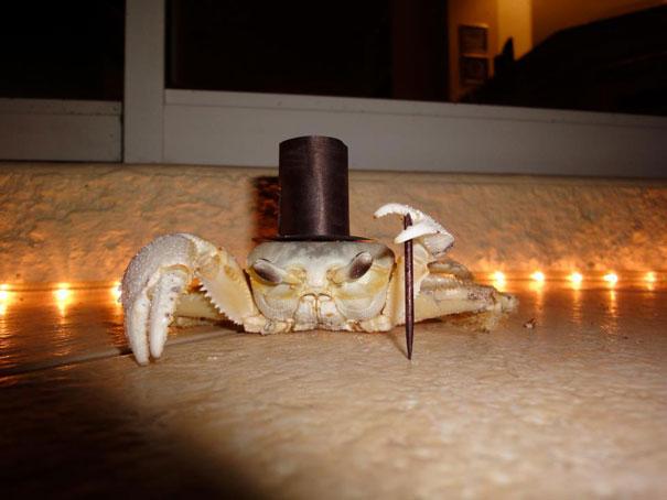 Crabe Classy