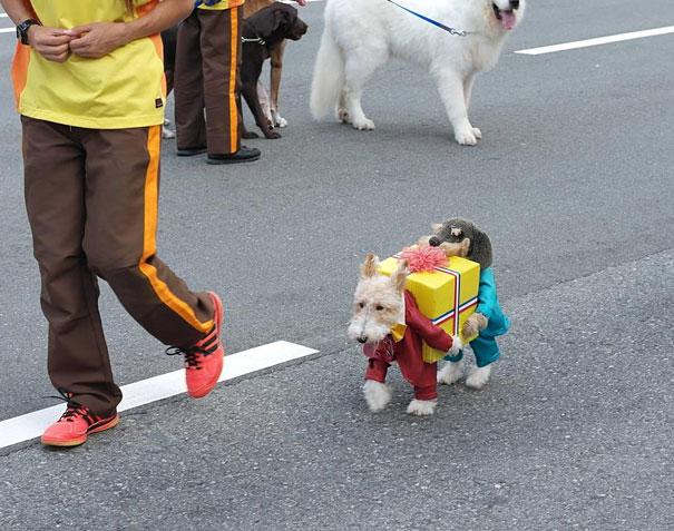 Dog (s) que leva um presente