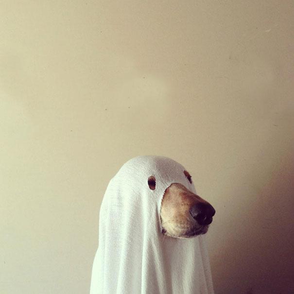 Esprit, Définitivement pas un chien