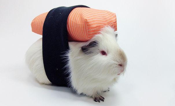 Sushi Guinea Pig