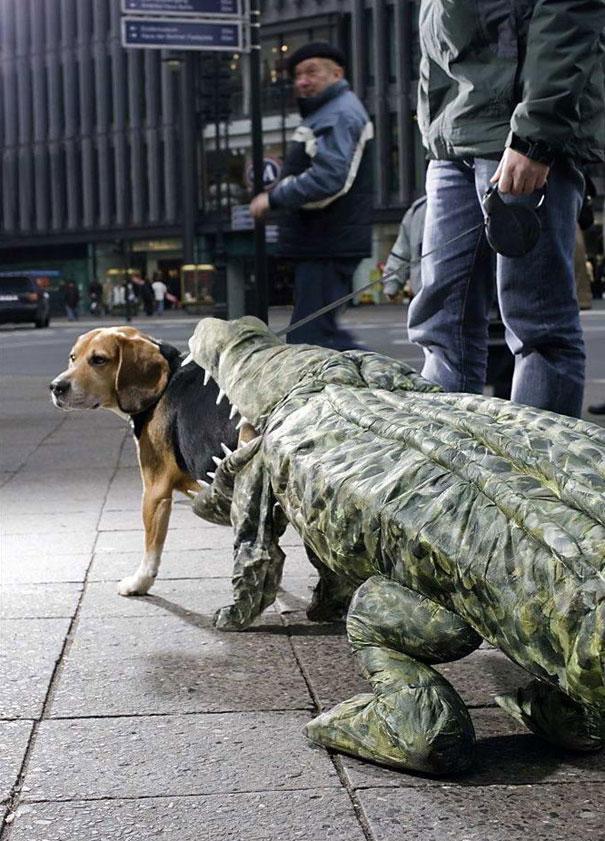 Cão sendo comido por um crocodilo