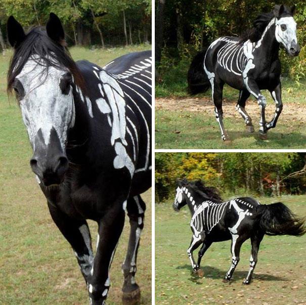 Cavalo de esqueleto