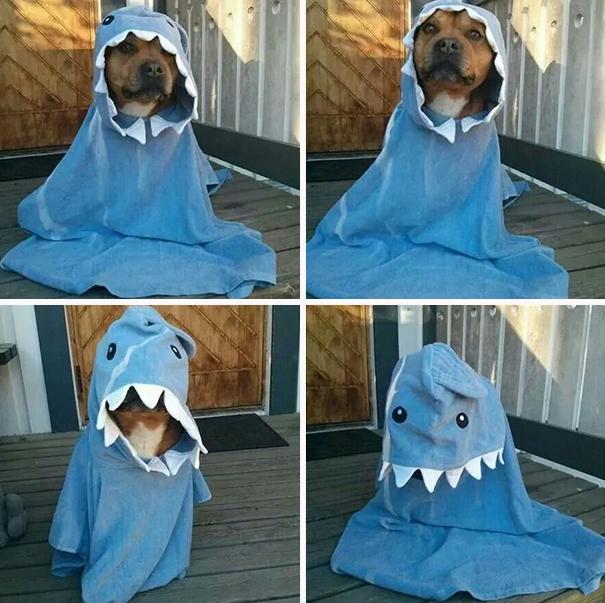 Adorável Cão Tubarão