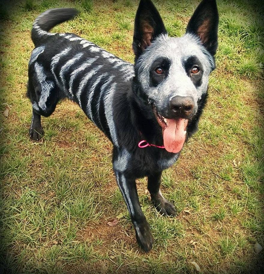 skeleton-dog-halloween-costume-non-toxic-pet-paint-1