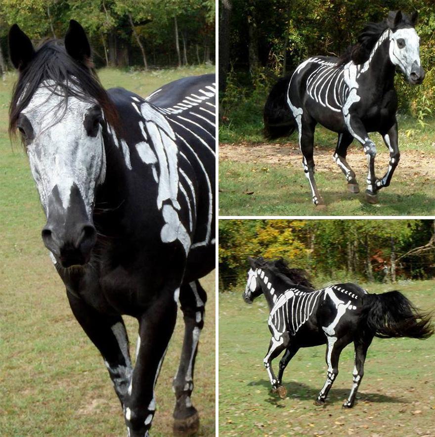 skeleton-dog-halloween-costume-non-toxic-pet-paint-13
