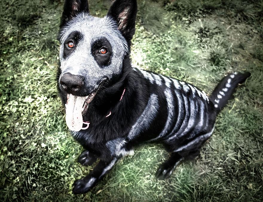 skeleton-dog-halloween-costume-non-toxic-pet-paint-2