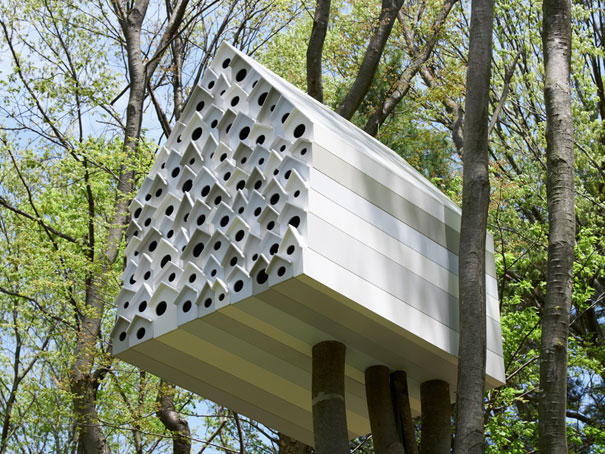 Birds and People Share Space in Birdhouse