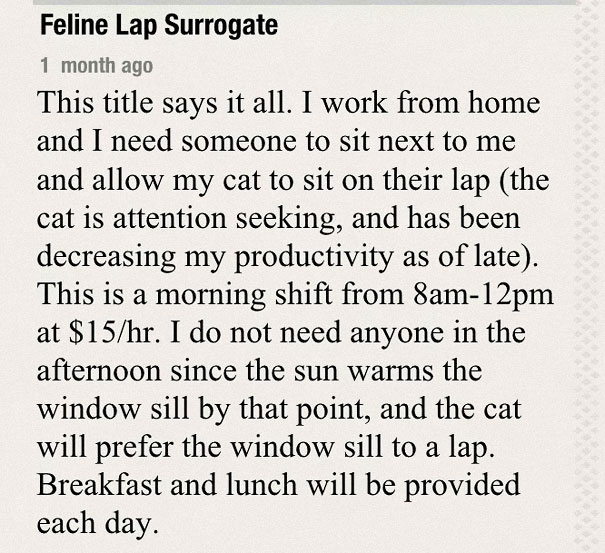 Probably the Best Job for a Cat Lover