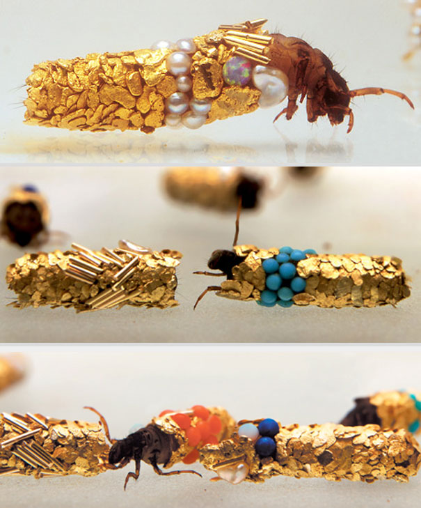 Fancy Larvae: Tiny Insects Build Their Protective Cases from Gold and Jewels