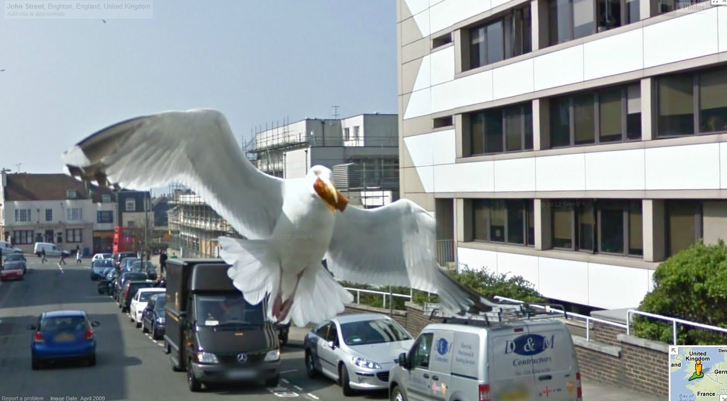 Funny Animals Found in Google Street View