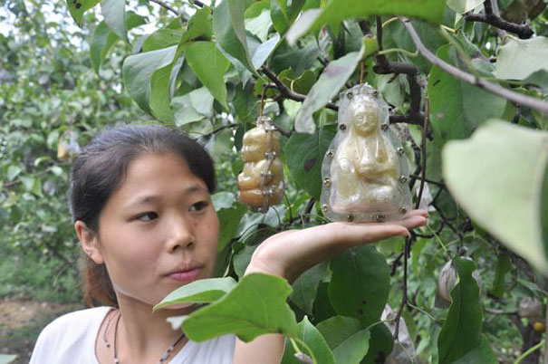 buddha-pear-3