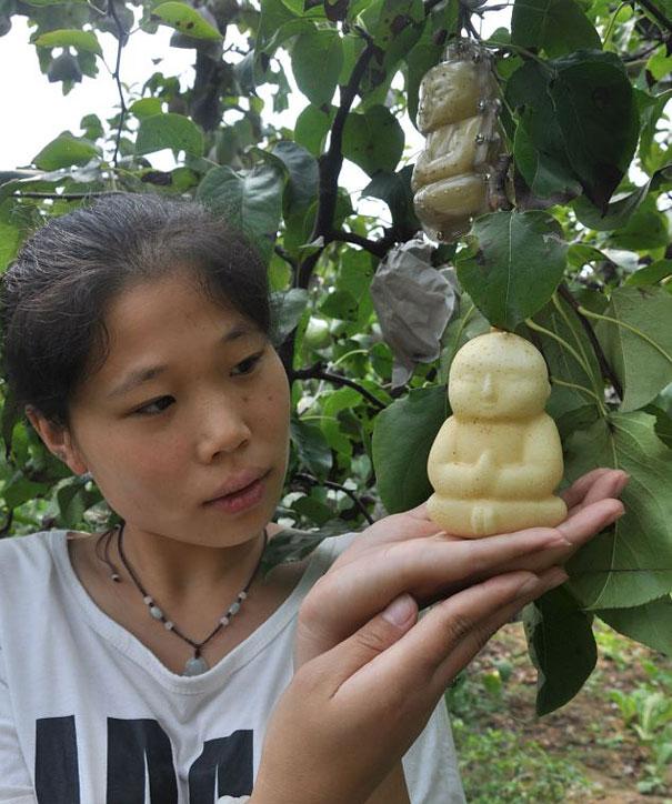 buddha-pear-5