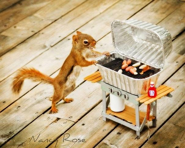 cute-squirrel-nancy-rose-2
