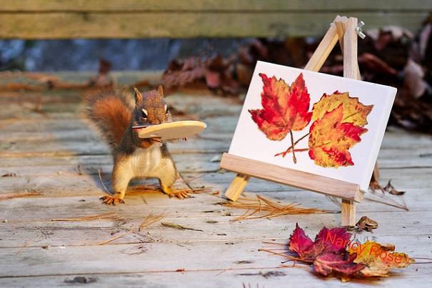 cute-squirrel-nancy-rose-3