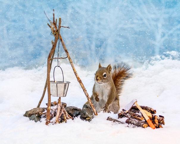 cute-squirrel-nancy-rose-4
