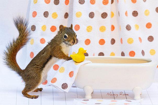 cute-squirrel-nancy-rose-6