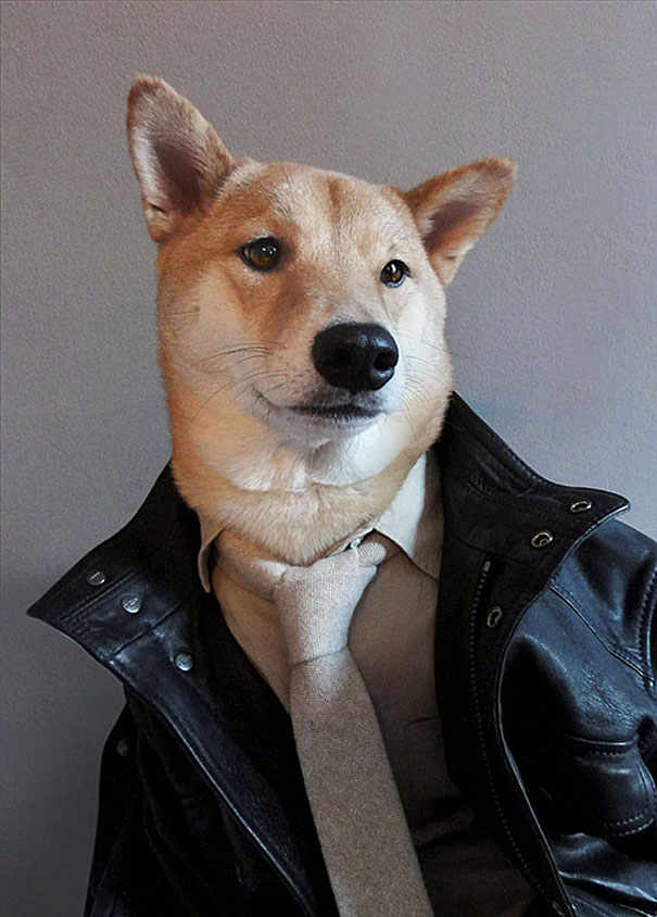 Menswear Dog: Shiba Inu Wearing Designer Gear
