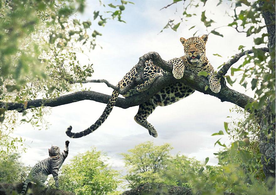 big-cat-small-cat-whiskas-3