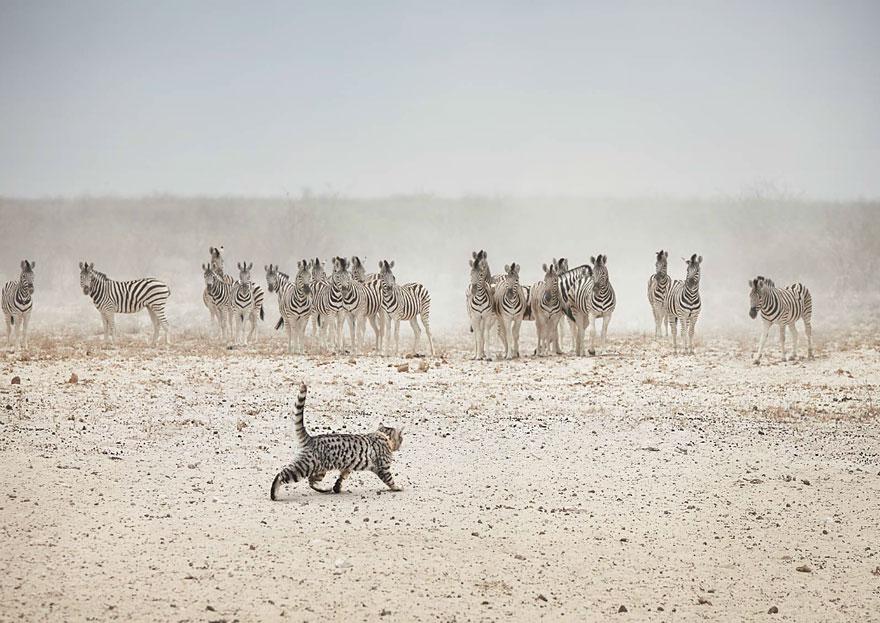 big-cat-small-cat-whiskas-4