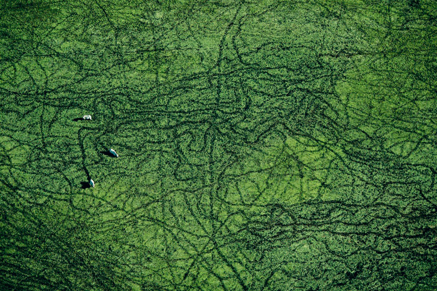 from-above-collection-yann-arthus-bertrand-24