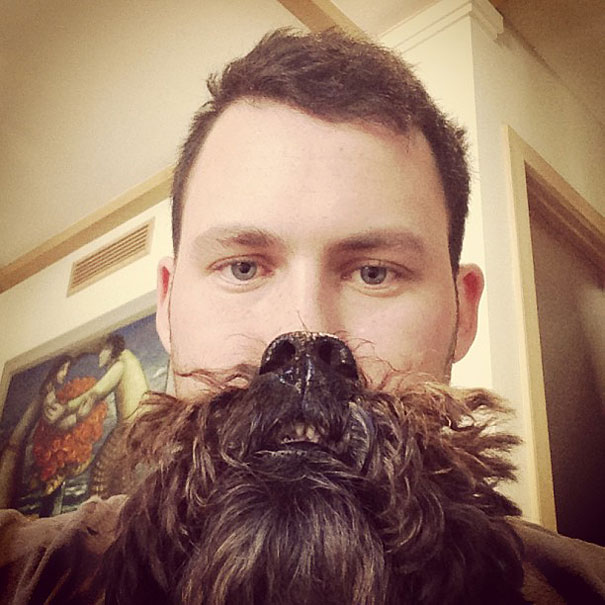 dog-beards-13