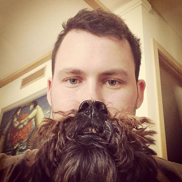 dog-beards-13