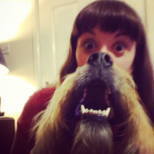 dog-beards-14