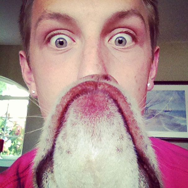 dog-beards-3