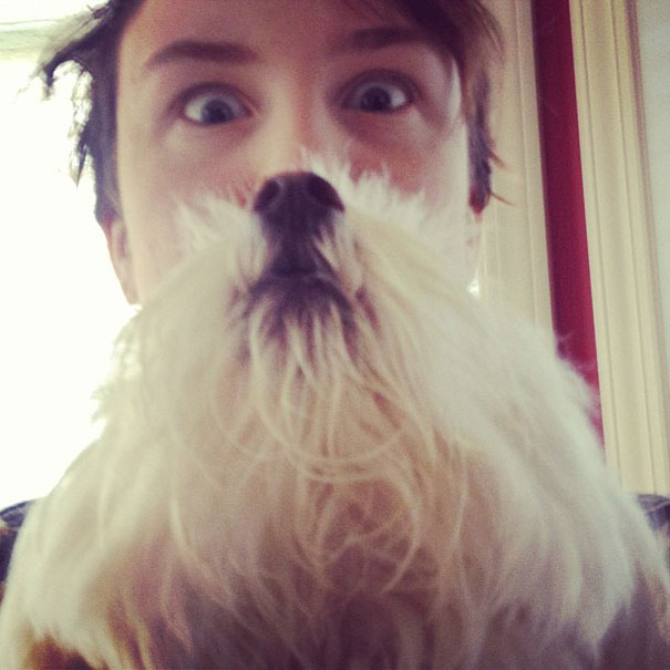 dog-beards-7