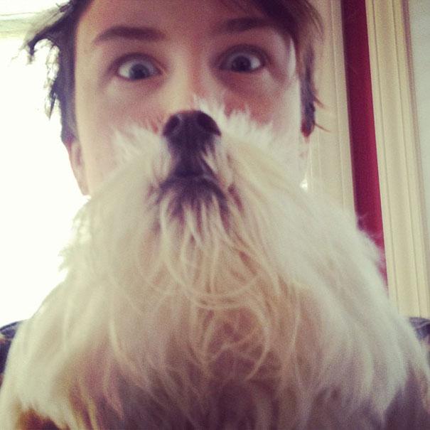 dog-beards-7