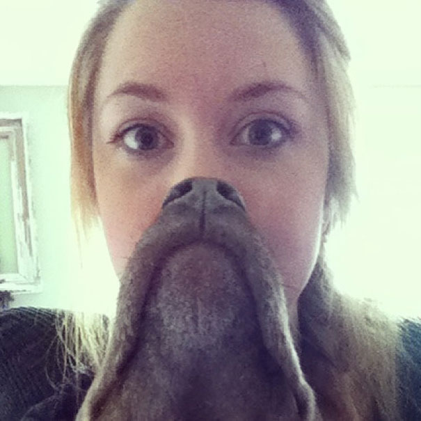 dog-beards-8