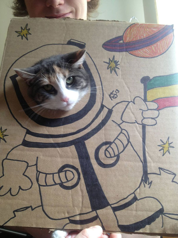 funny-cardboard-cat-costumes-1