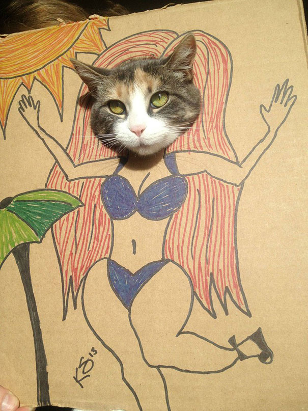 funny-cardboard-cat-costumes-2