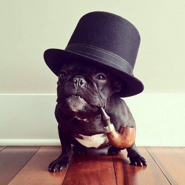 Instagram's Most Hipster French Bulldog (15 pics)