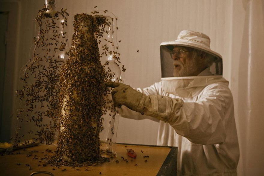 Amazing 3D Sculptures Built by Bees (10 pics)