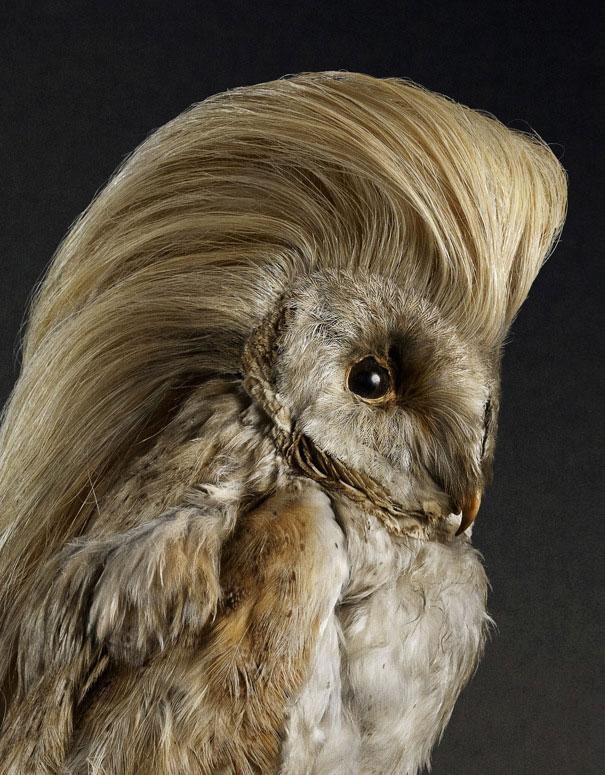Hilarious Bird Hairdos for Shampoo Commercial (6 pics)