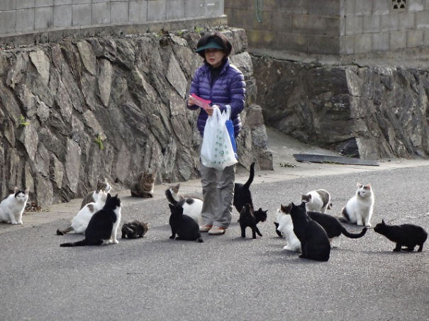 Two Islands In Japan Are Ruled By Cats