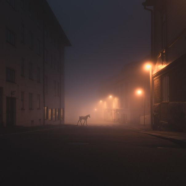 Night Animals By Mikko Lagerstedt